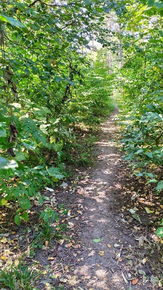 """""""Це справжні джунглі"""" – житель Тернопільщини розповів чому краще оминати тамтешній парк (ФОТОФАКТ), фото-10"""
