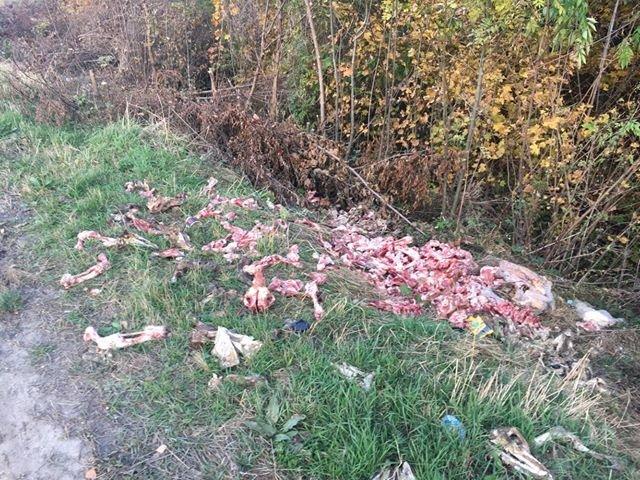 """""""Кості і черепи"""": на Тернопільщині тваринні рештки викидають прямо на узбіччя дороги (ФОТО, 18+), фото-1"""