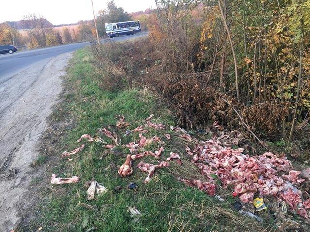 """""""Кості і черепи"""": на Тернопільщині тваринні рештки викидають прямо на узбіччя дороги (ФОТО, 18+), фото-2"""