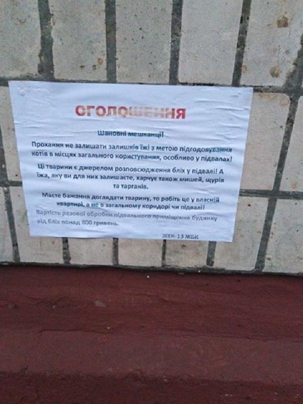 У Тернополі ЖЕКи шкодять безпритульним тваринам (ФОТОФАКТ), фото-3