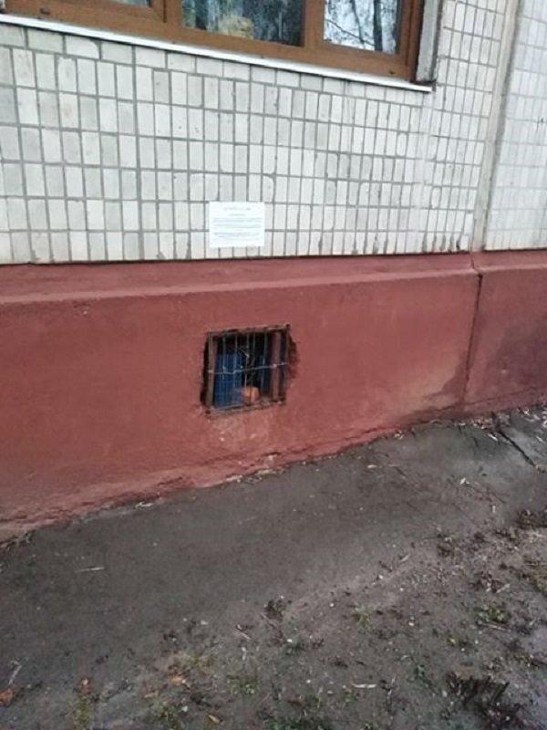 У Тернополі ЖЕКи шкодять безпритульним тваринам (ФОТОФАКТ), фото-1