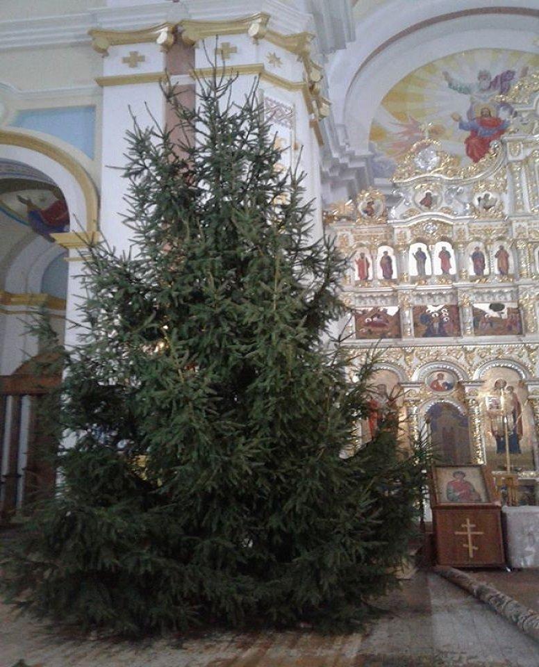 Багато років ростили біля свого дому: у храм  Тернопільщині родина подарувала новорічну красуню (ФОТОФАКТ), фото-1