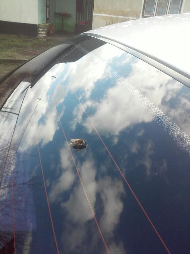 """""""Примха природи чи катаклізм?"""": на Тернопільщині прокинулися бджоли (ФОТОФАКТ), фото-1"""