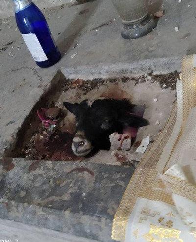 Голова ягняти у храмі, сліди крові: на Тернопільщині завелись сатанисти? (ФОТО, 18+), фото-1