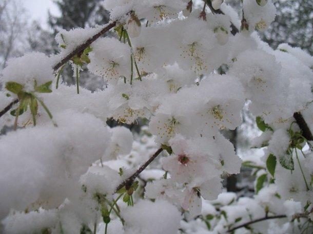 Східну Європу засипало снігом: негода наближається до України (ФОТО), фото-9