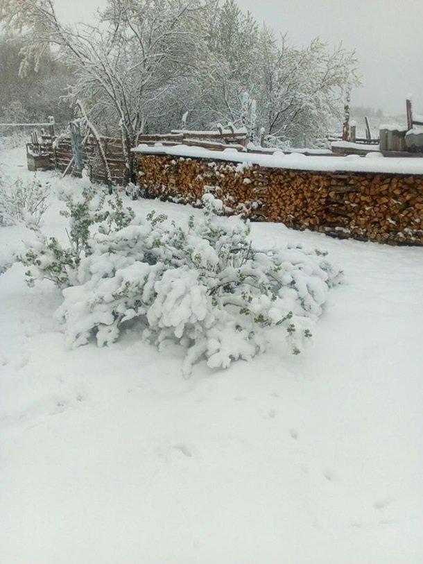 Східну Європу засипало снігом: негода наближається до України (ФОТО), фото-7