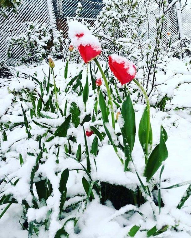 Східну Європу засипало снігом: негода наближається до України (ФОТО), фото-6