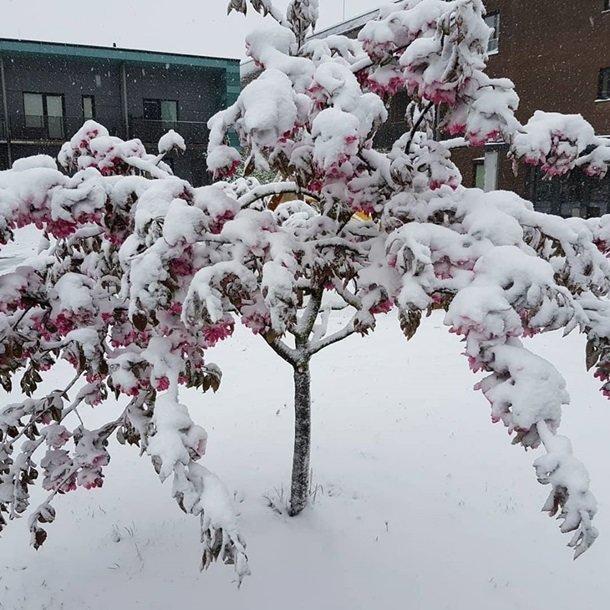 Східну Європу засипало снігом: негода наближається до України (ФОТО), фото-5