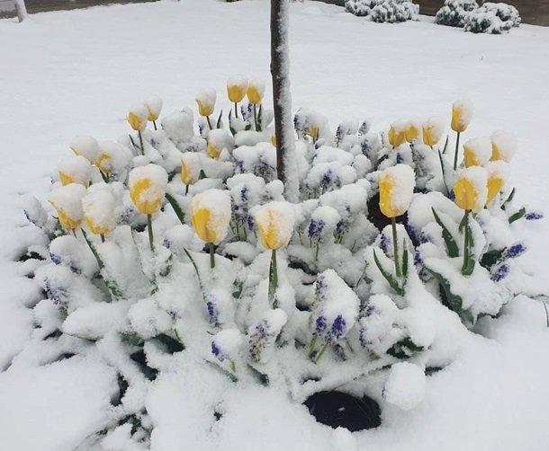 Східну Європу засипало снігом: негода наближається до України (ФОТО), фото-4