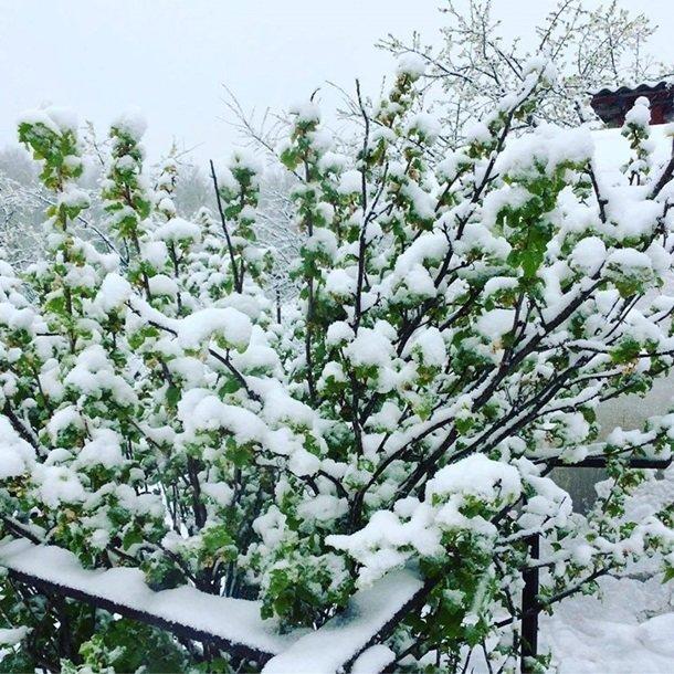 Східну Європу засипало снігом: негода наближається до України (ФОТО), фото-3
