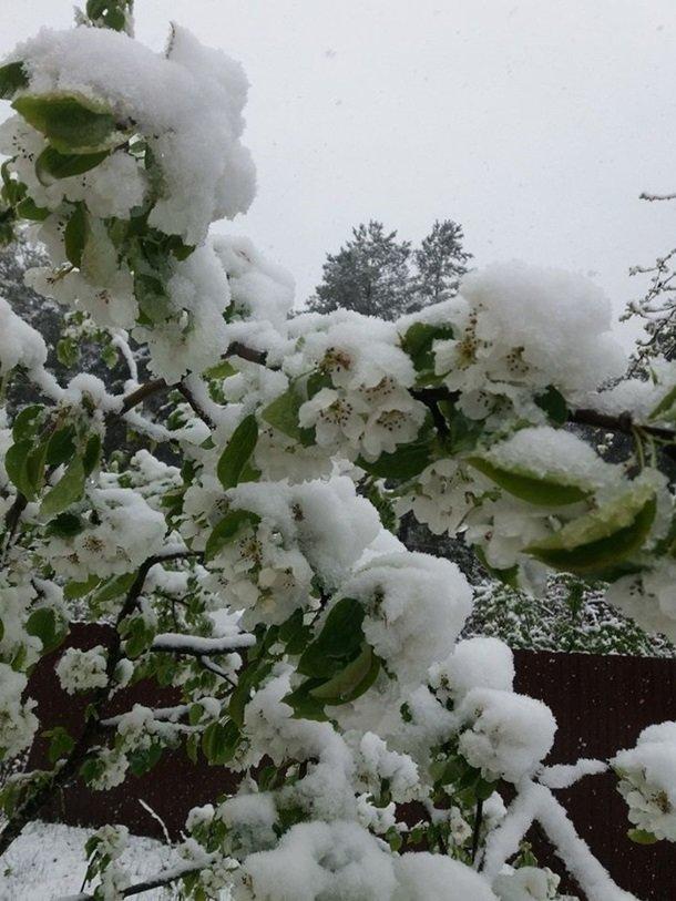 Східну Європу засипало снігом: негода наближається до України (ФОТО), фото-2