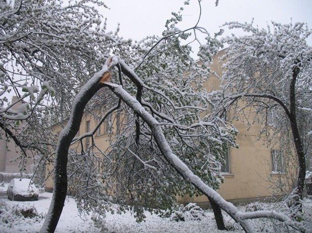 Східну Європу засипало снігом: негода наближається до України (ФОТО), фото-1
