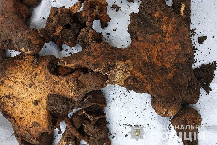 Людські рештки розкопали на приватному господарстві на Теребовлянщині (ФОТО, +18), фото-2