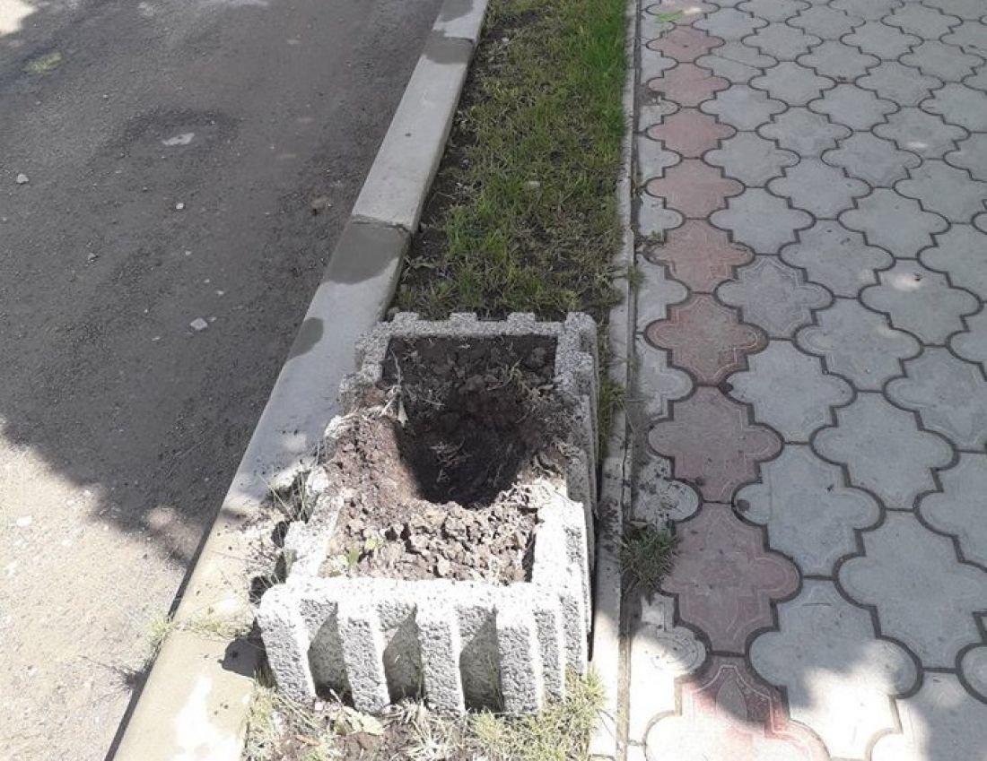 У селищі на Тернопільщині поцупили туї, висаджені вздовж дороги (ФОТО), фото-2