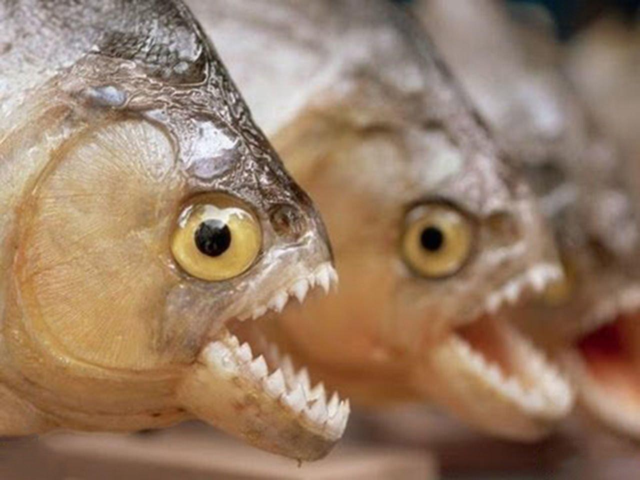 """""""Агресивні носії паразитів"""": у річках Тернопільщини небезпечні """"риби-чужинці"""" можуть знищити """"усе живе"""", фото-2"""