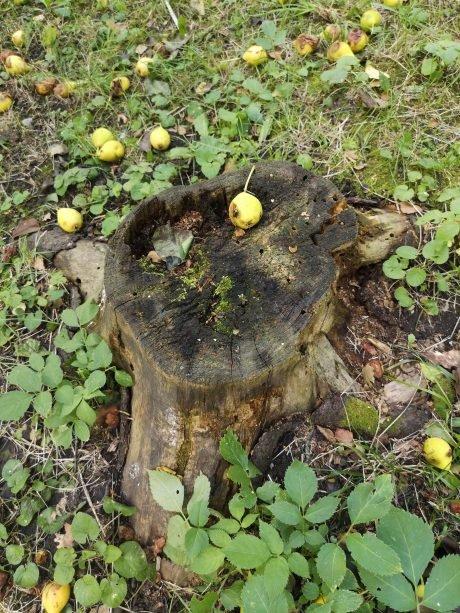 """""""Посадив на пеньок і бив палицею"""": тернополянка стала свідком розправи над маленьким кошенятком (ФОТО, 18+), фото-3"""