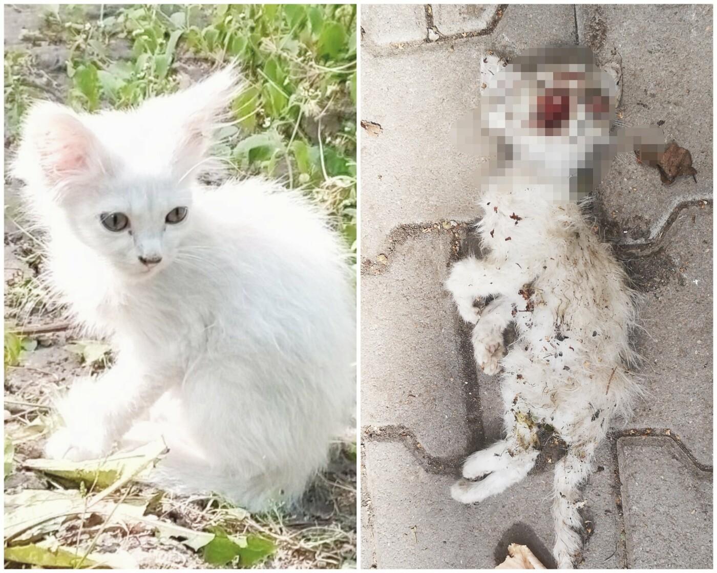 """""""Посадив на пеньок і бив палицею"""": тернополянка стала свідком розправи над маленьким кошенятком (ФОТО, 18+), фото-1"""