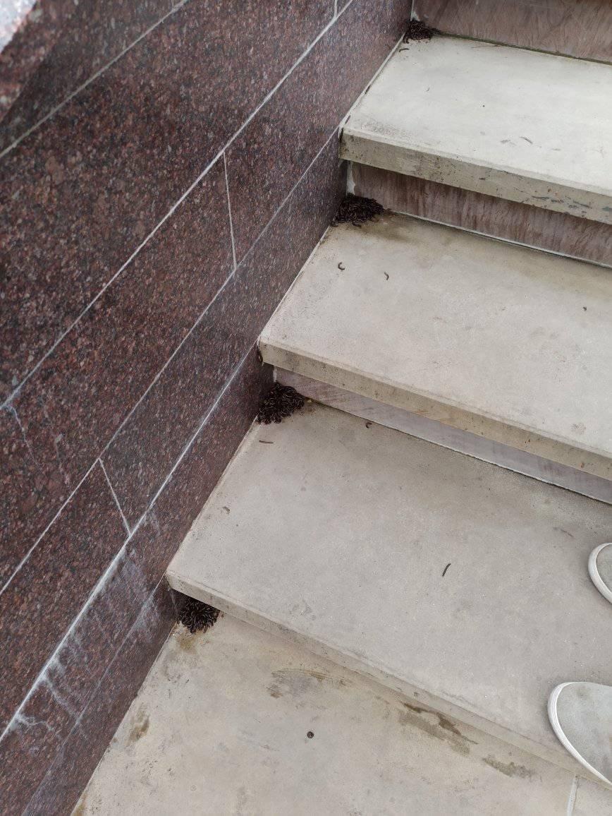 """""""Що це за хробаки?"""": моторошні істоти плодяться і лякають тернополян біля відомого фонтану (ФОТО), фото-1"""