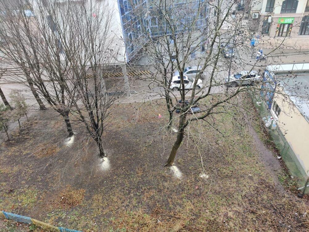 """""""Візьми і зріж"""": поліція знайшла вандалів, котрі підпиляли дерева у центрі Тернополя, фото-1"""