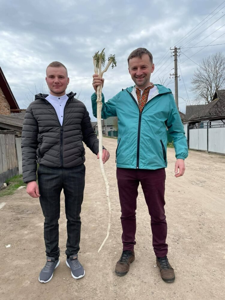 Людського зросту: на Тернопільщині викопали хрін-гігант (ФОТО), фото-1