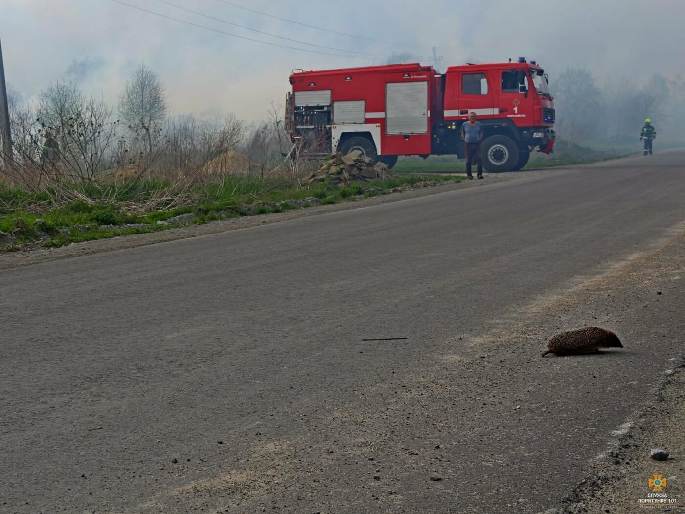 """""""Їжачок дивом врятувався"""": вогнеборці оприлюднили фото страшних наслідків пожежі поблизу Тернополя (ФОТО), фото-1"""