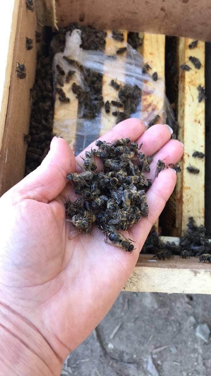 """""""8 мільйонів мертвих бджіл збиралася доставити """"Укрпошта"""""""": трупи комах були у пакетах (ФОТО) , фото-1"""