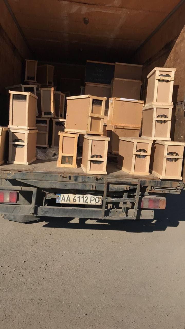 """""""8 мільйонів мертвих бджіл збиралася доставити """"Укрпошта"""""""": трупи комах були у пакетах (ФОТО) , фото-3"""