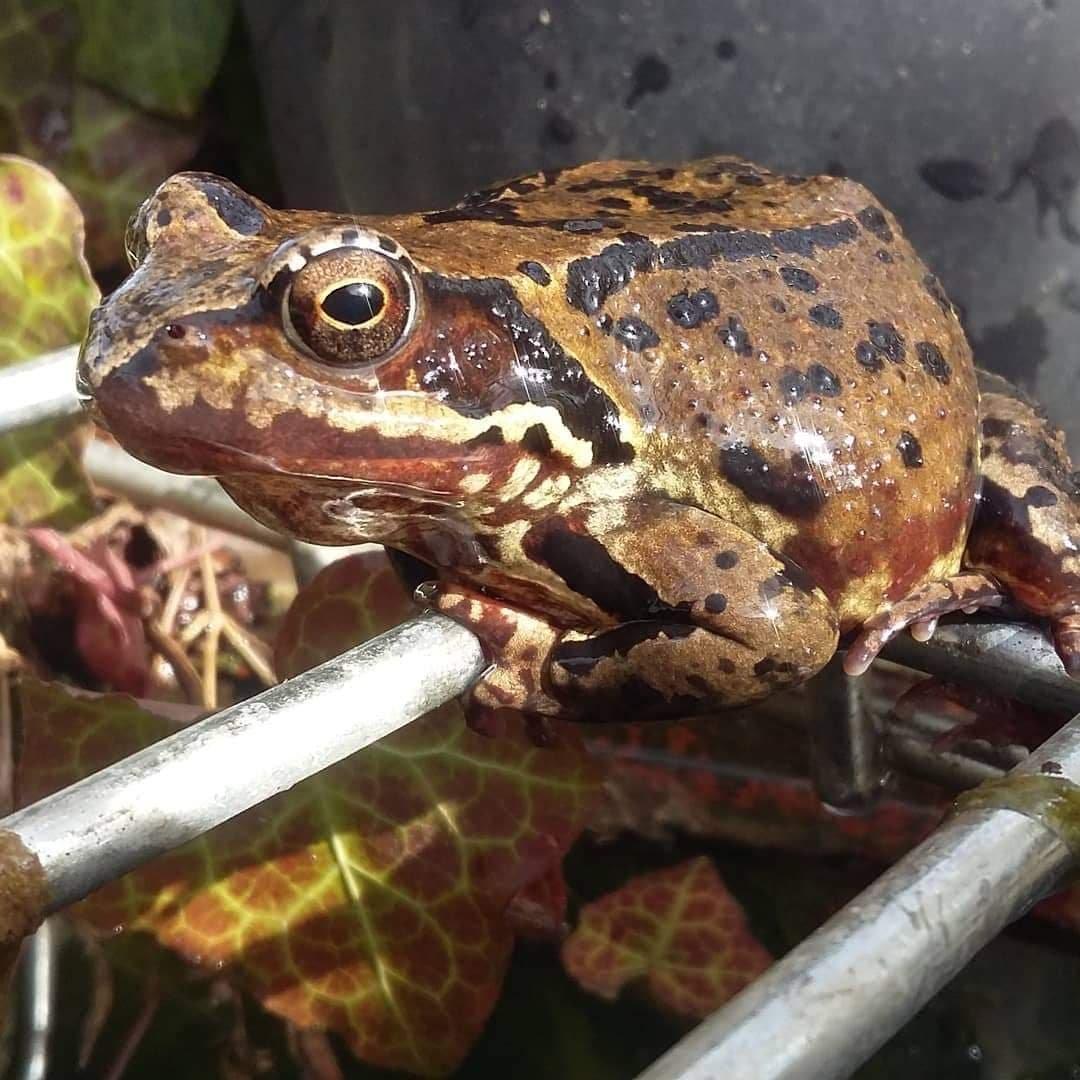"""""""Вони є абсолютно дикими"""": тернополянин живе у квартирі з жабами та тритонами (ФОТО), фото-2"""