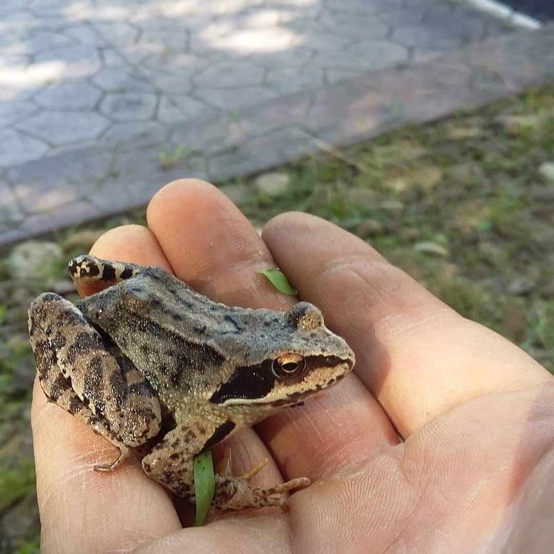 """""""Вони є абсолютно дикими"""": тернополянин живе у квартирі з жабами та тритонами (ФОТО), фото-4"""