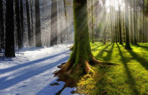 Зимове бабине літо: синоптики розповіли, якої погоди чекати у грудні , Дмитро Бондаренко